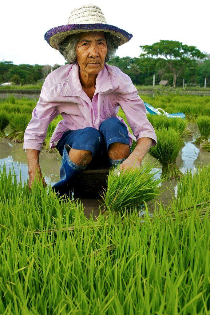 ATV reccomend Asian rice farmer picture