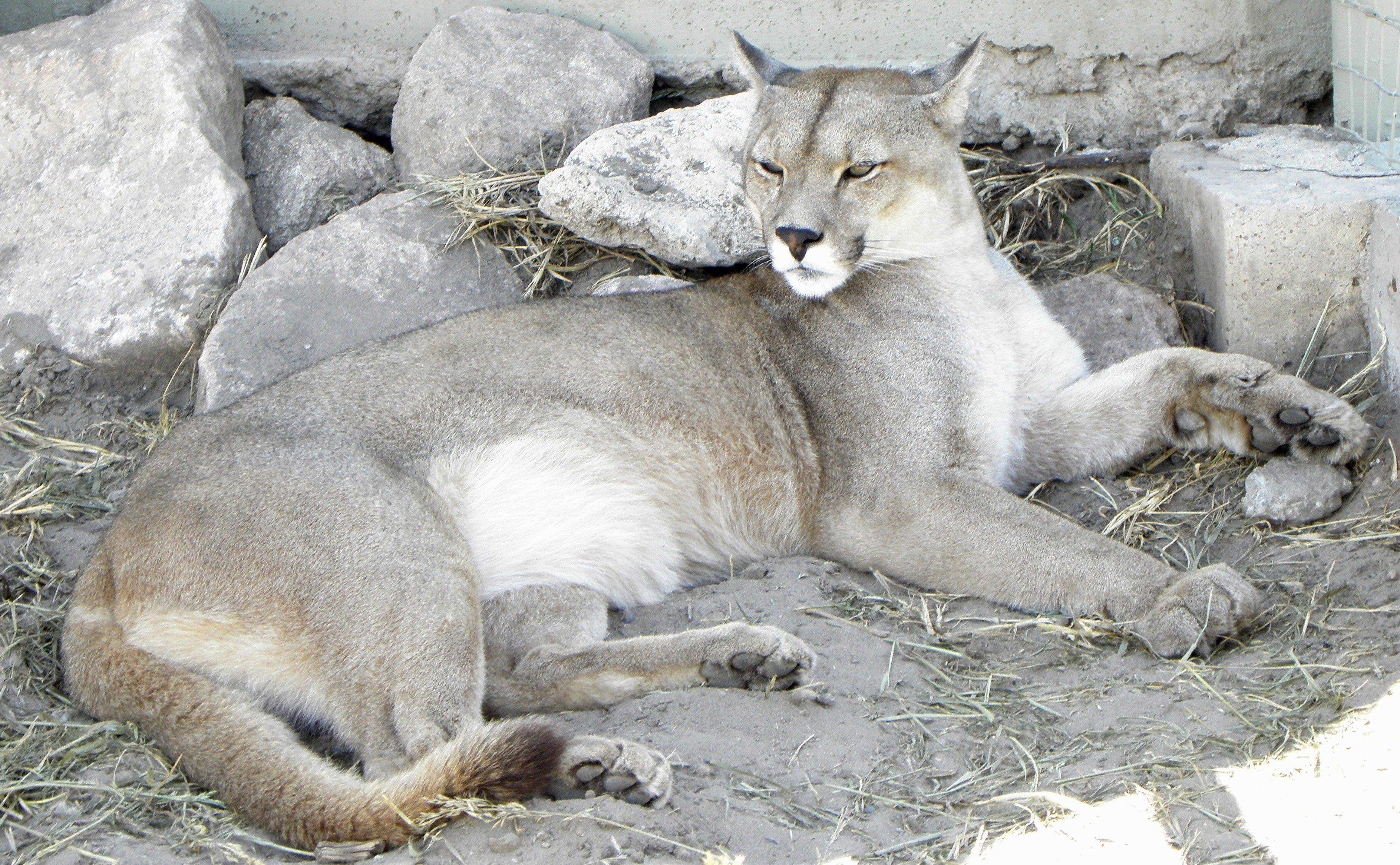 Milf douglas az cougar Excuse, have