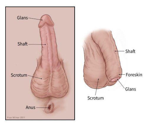 Head of penis has no hole