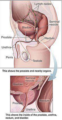Orgasm prostate induced