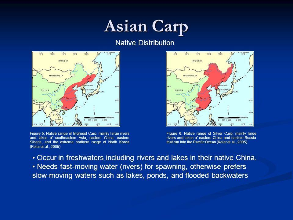 best of Carp home Asian native