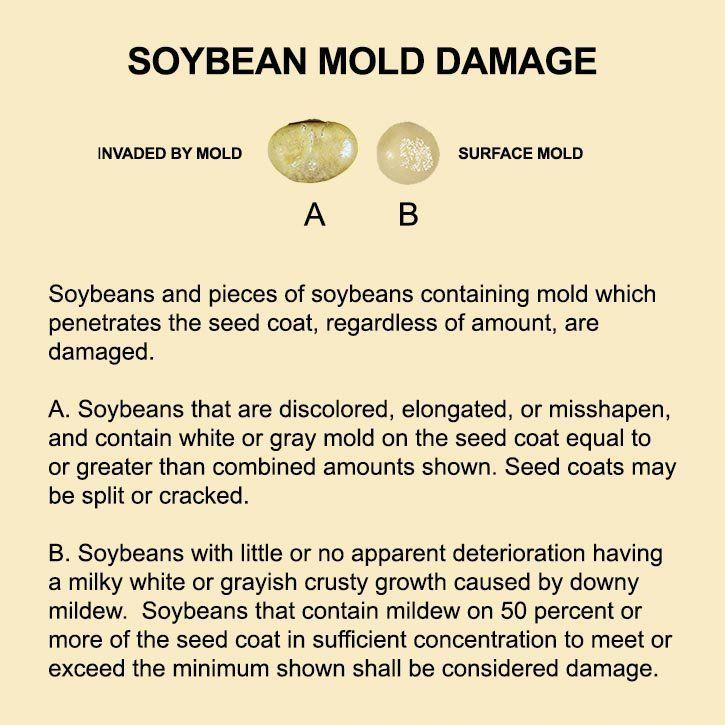 best of Mold seed Can penetrate