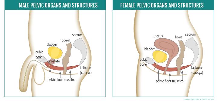 Pelvic floor exercises orgasm