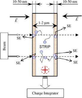 Metal detector strip